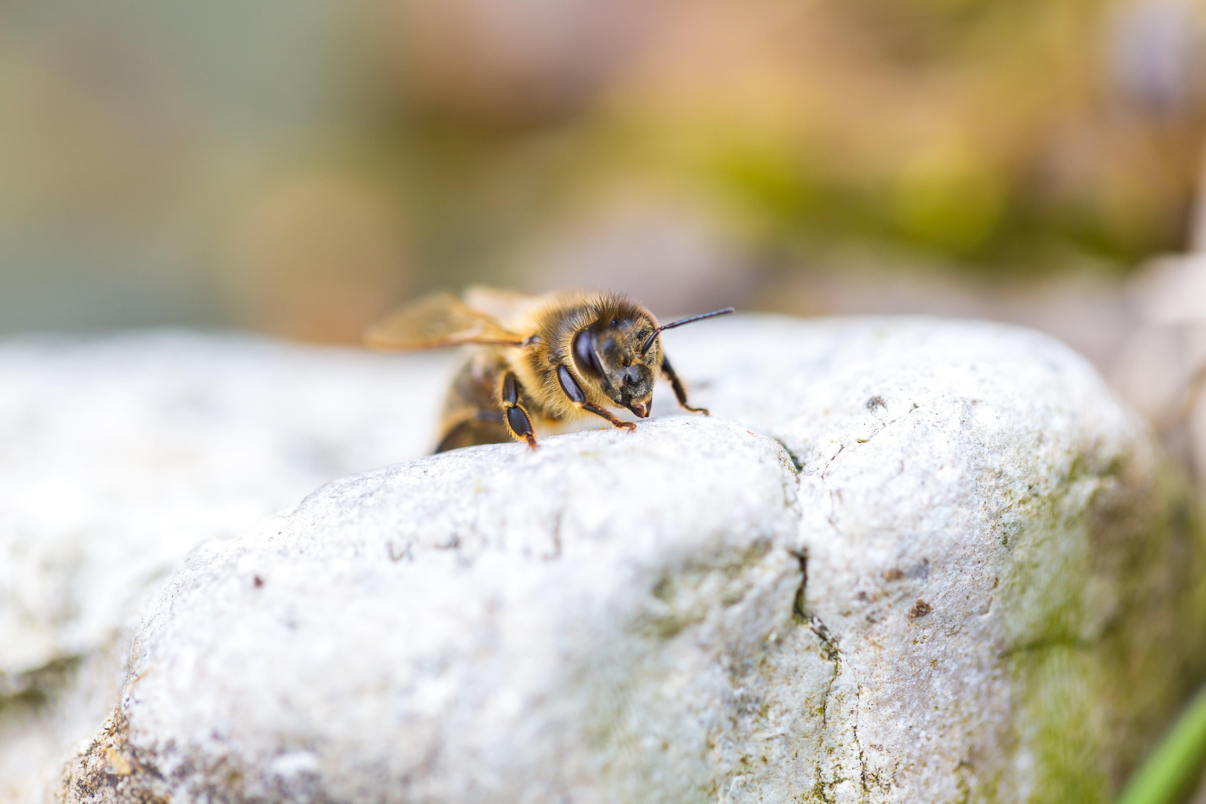 O tipo do própolis é definido dependendo de qual espécie de abelha produziu